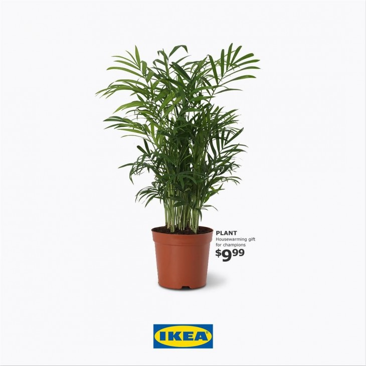 "IKEA ""gift for champions"""
