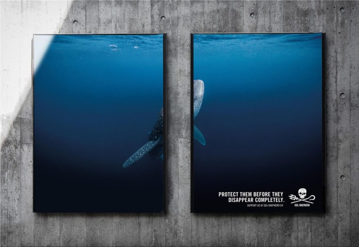 "Sea Shepherd ""PROTECT THEM BEFORE THEY DISAPPEAR COMPLETELY"""