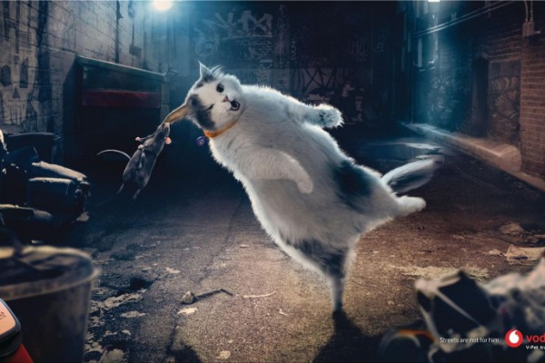 "Vodafone ""Streets are not for him. Vodafone V-Pet"""