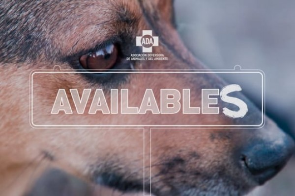 """ADA: """"Availables"""" by BBDO"""