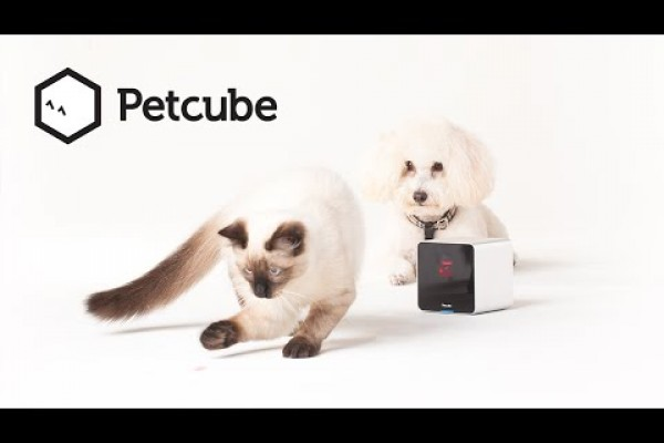 Petcube: Stay connected to your pets when you are not at home