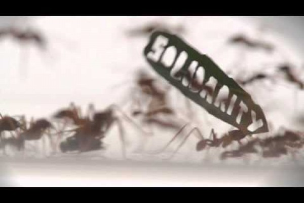 World Wildlife Fund: Ant rally