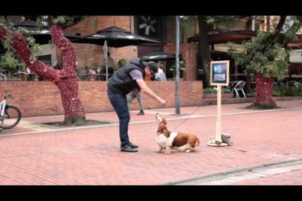 Hush Puppies: dog guide