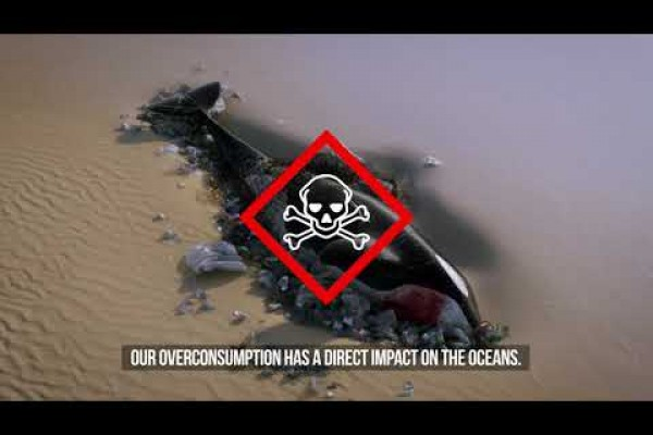 "Sea Shepherd ""Operation Ocean"""