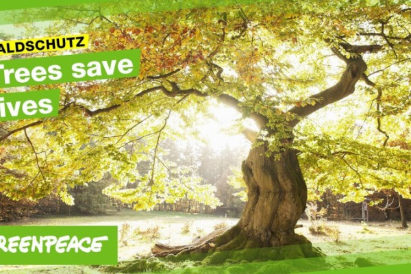 Greenpeace: old growth beech forests in public domain