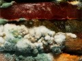 "Burger King ""The Moldy Whopper"" #NoArtificialPreservatives"