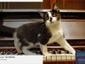 """Misu """"Thousands of views do not compare to one from home. Adopt."""""""