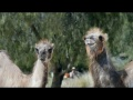 GEICO: Camels put up with this all the time